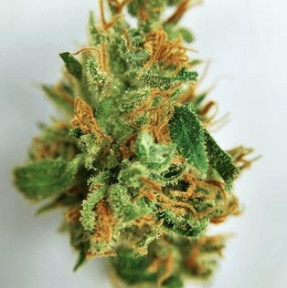 Atomic Jack marijuana picture