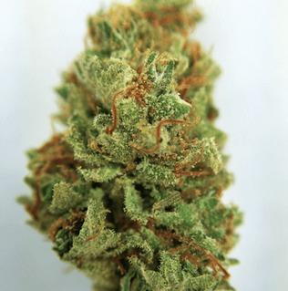 dirty girl weed strain
